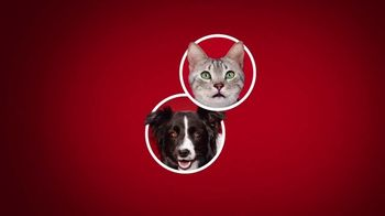Purina ONE TV Spot, '28 Days: True Instinct Formulas for Dogs' - Thumbnail 2