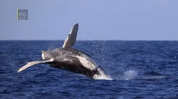 Disney+ TV Spot, 'Secrets of Whales'