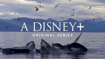 Disney+ TV Spot, 'Secrets of Whales' - Thumbnail 1