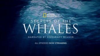 Disney+ TV Spot, 'Secrets of Whales' - Thumbnail 10