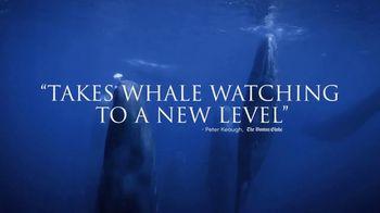 Disney+ TV Spot, 'Secrets of Whales' - Thumbnail 7
