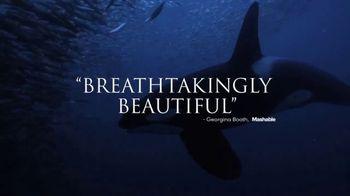 Disney+ TV Spot, 'Secrets of Whales' - Thumbnail 8