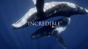 Disney+ TV Spot, 'Secrets of Whales' - Thumbnail 9