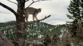 Blue Wilderness TV Spot, 'Pursuit of Prey' - Thumbnail 5