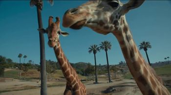 San Diego Zoo Safari Park TV Spot, 'Make Memories and a Difference: Welcome Back' - Thumbnail 5