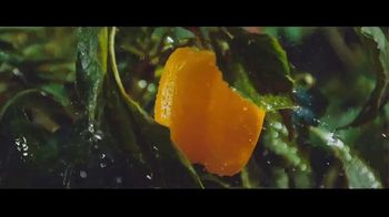Spectracide Triazicide Insect Killer TV Spot, 'Your Yard' - Thumbnail 8