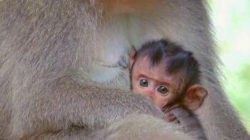 World Wildlife Fund TV Spot, 'Love It or Lose It: Love Me Tender' Song by K.S. Rhoads