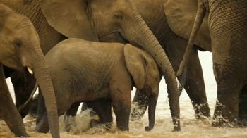 World Wildlife Fund TV Spot, 'Love It or Lose It: Love Me Tender' Song by K.S. Rhoads - Thumbnail 2