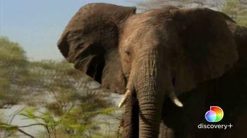 Discovery+ TV Spot, 'Serengeti II' - Thumbnail 2
