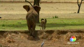 Discovery+ TV Spot, 'Serengeti II' - Thumbnail 3