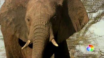 Discovery+ TV Spot, 'Serengeti II' - Thumbnail 4