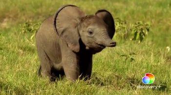 Discovery+ TV Spot, 'Serengeti II' - Thumbnail 5