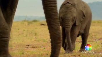 Discovery+ TV Spot, 'Serengeti II' - Thumbnail 6