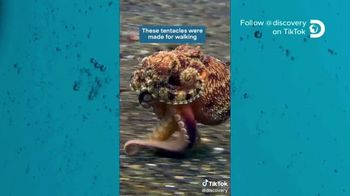 TikTok TV Spot, 'Discovery Channel: Octopus' - Thumbnail 5