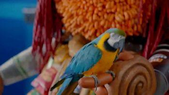 AmPm Guatemalan Coffee TV Spot, 'Night Owl' - Thumbnail 5