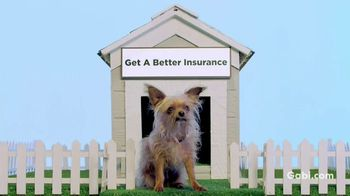 Gabi Personal Insurance Agency TV Spot, 'Dog'