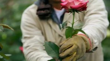 Whole Foods Market TV Spot, 'Sourced for Good: Flowers' - Thumbnail 3