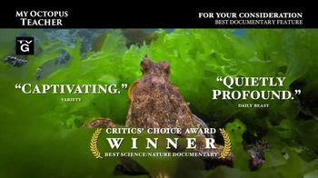 Netflix TV Spot, 'My Octopus Teacher' - Thumbnail 3
