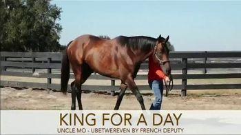 Irish Hill & Dutchess Views Stallions TV Spot, 'King For a Day'