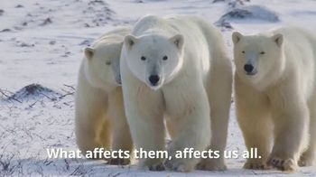Polar Bears International TV Spot, 'Protect Their Future'