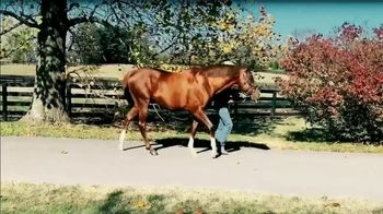 Airdrie Stud TV Spot, 'Collected' - Thumbnail 1