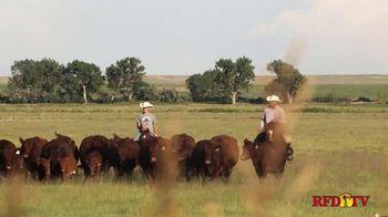 American Shorthorn Association TV Spot, 'America's Herd Improver' - Thumbnail 2