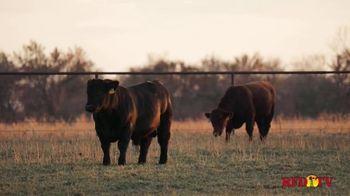 American Shorthorn Association TV Spot, 'America's Herd Improver' - Thumbnail 7