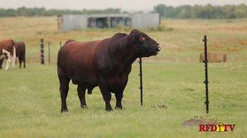 American Shorthorn Association TV Spot, 'America's Herd Improver'