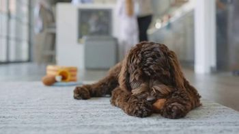 Chewy.com TV Spot, 'Health and Walk'