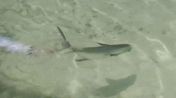 King Sailfish Release Mounts TV Spot, 'A Conservation Company' - Thumbnail 10