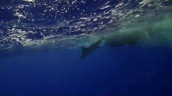 King Sailfish Release Mounts TV Spot, 'A Conservation Company' - Thumbnail 4