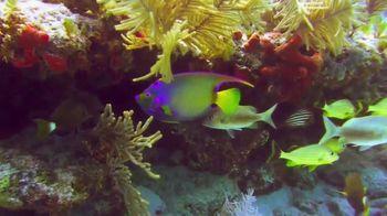 The Florida Keys & Key West TV Spot, 'Beauty In the World: Health & Safety Protocols' - Thumbnail 3