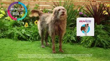 Bravecto TV Spot, 'Bravo' - Thumbnail 5