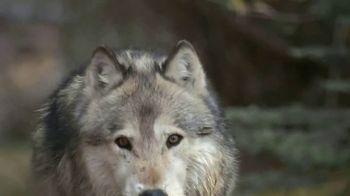 Blue Buffalo BLUE Wilderness TV Spot, 'Look Closely' - Thumbnail 2