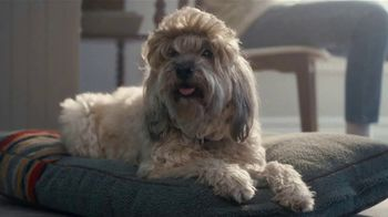 XFINITY Internet TV Spot, 'Awkward Haircuts: $19.99' Featuring Amy Poehler - Thumbnail 3