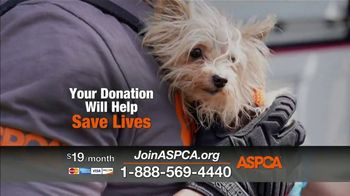 ASPCA TV Spot, 'Abused Animals: Don't Give Up' Song by Ruelle Feat. Fleurie