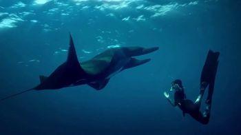 Rolex TV Spot, 'Our Precious Ecosystem' - Thumbnail 5