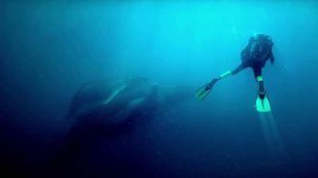 Rolex TV Spot, 'Our Precious Ecosystem' - Thumbnail 8
