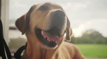American Humane TV Spot, 'Wounds' Featuring Kristin Chenoweth - Thumbnail 4
