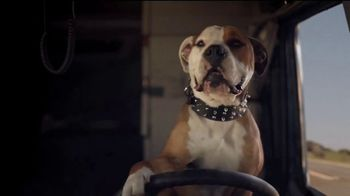 Subaru A Lot to Love Event TV Spot, 'Dog Tested: Honk' [T2] - Thumbnail 3