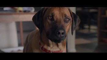 Wells Fargo Home Mortgage TV Spot, 'Lulu and Lobo Need a Space Just for Them' - Thumbnail 3