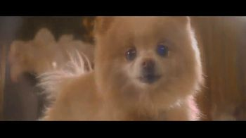 Wells Fargo Home Mortgage TV Spot, 'Lulu and Lobo Need a Space Just for Them' - Thumbnail 7