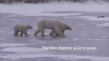 World Wildlife Fund TV Spot, 'Polar Bears' Song by A Great Big World - Thumbnail 2