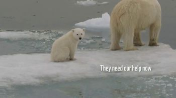 World Wildlife Fund TV Spot, 'Polar Bears' Song by A Great Big World - Thumbnail 4