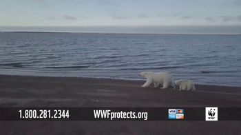 World Wildlife Fund TV Spot, 'Polar Bears' Song by A Great Big World - Thumbnail 6