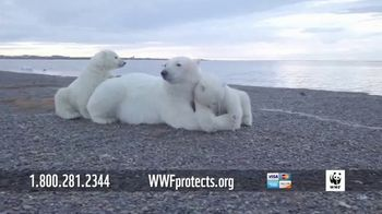 World Wildlife Fund TV Spot, 'Polar Bears' Song by A Great Big World - Thumbnail 7