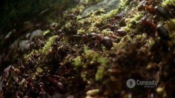 CuriosityStream TV Spot, 'Ant Mountain' - Thumbnail 4