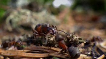 CuriosityStream TV Spot, 'Ant Mountain' - Thumbnail 5