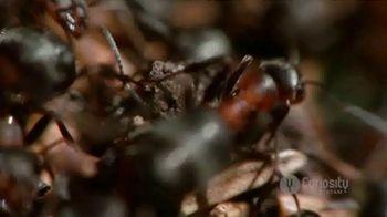 CuriosityStream TV Spot, 'Ant Mountain' - Thumbnail 7