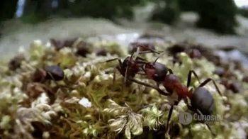 CuriosityStream TV Spot, 'Ant Mountain'